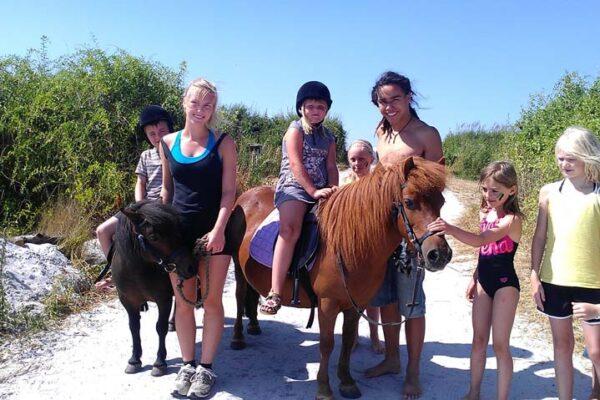 pony på stranden